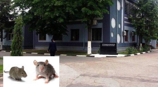 Achiziții CAO: deratizări de mii de euro și otravă ieftină pentru șoareci